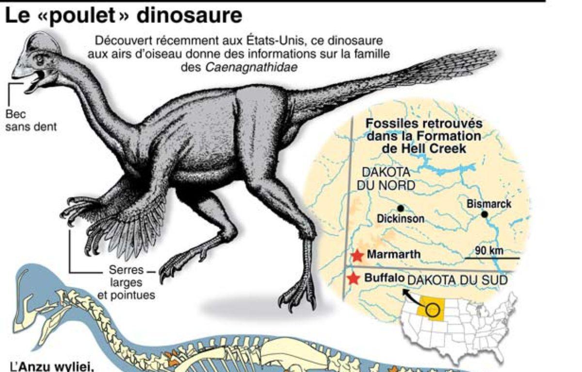 Données et description d'Anzu Wyliei, dinosaure à plumes aux allures de poulet géant qui vivait en Amérique du Nord il y a 66 millions d'années. –