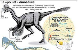 Données et description d'Anzu Wyliei, dinosaure à plumes aux allures de poulet géant qui vivait en Amérique du Nord il y a 66 millions d'années.