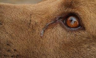 Un chien triste. Illustration.