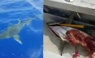 VIDEO. Un requin dévore sous leurs yeux le thon qu'ils viennent de pêcher