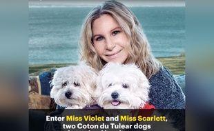 Barbara Streisand et ses deux chiens, Miss Violet et Miss Scarlett, conçus par clonage.