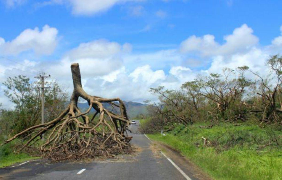 Photo non datée, fournie par le gouvernement des îles Fidji le 22 février 2016, montrant un arbre déraciné après le passage du cyclone Winston dans l'ouest des Fidji – FIJI GOVERNMENT FIJI GOVERNMENT