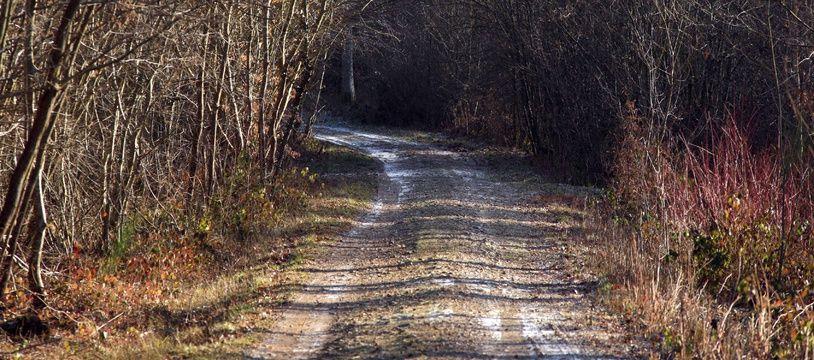 Aïssa Z. est soupçonné de 34 faits d'abus sexuels commis dans la forêt de Sénart entre 1995 et 2000 (photo d'illustration)