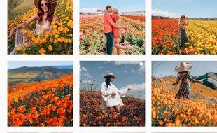 Des photos de champs de coquelicots à Lake Elsinor postées sur Instagram.