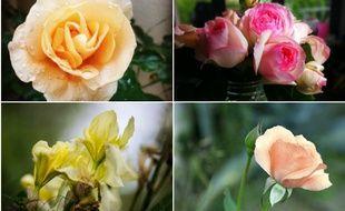C'est le bouquet. Une cueillette variée envoyée par nos internautes.