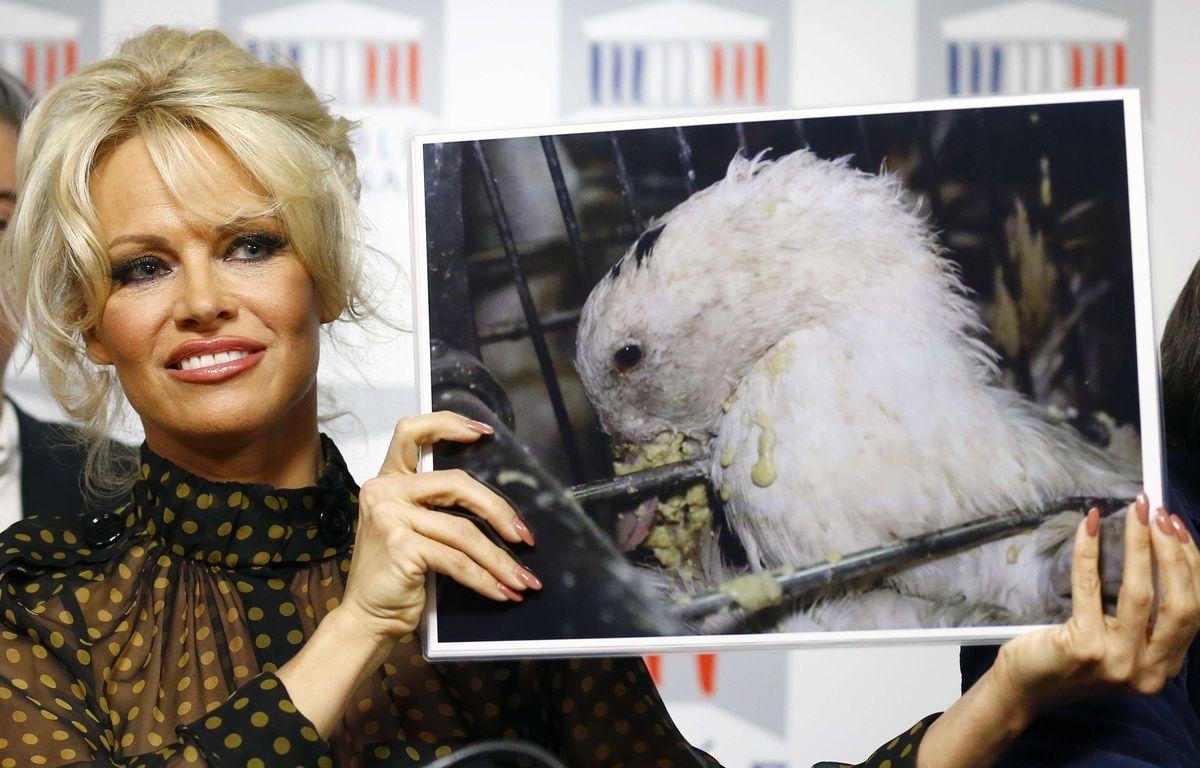 Pamela Anderson était à l'Assemblée nationale mardi. – Francois Mori/AP/SIPA