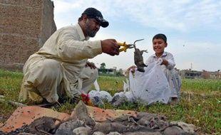 Naseer Ahmad ramasse des rats morts à Peshawar le 18 mai 2014 alors qu'il lutte contre la prolifération des rongeurs dans la ville pakistanaise