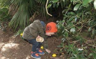 Un petit garçon remplit ses mains d'œufs en chocolat.
