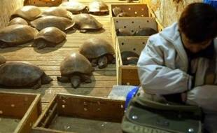 Un vendeur de tortues dans un marché de Canton, au sud de la Chine