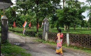 La plantation de Dagapur Tea Garden reste fermée en raison de la grève des ouvriers agricoles, en Inde, le mardi 7 août.