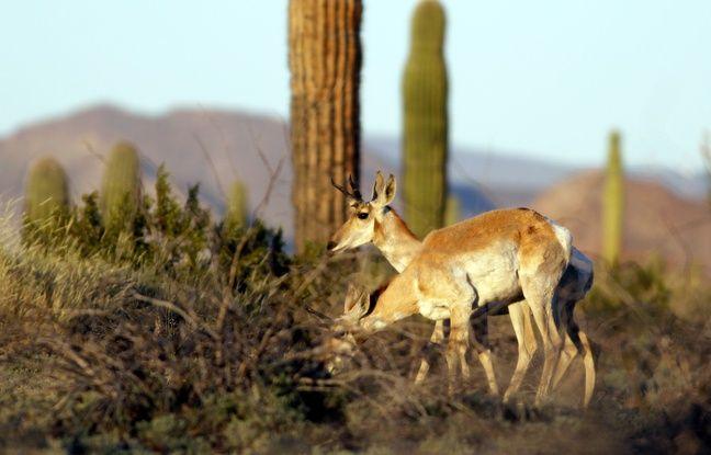 Animaux: Un mur entre les Etats-Unis et le Mexique serait «un crime contre la biodiversité»