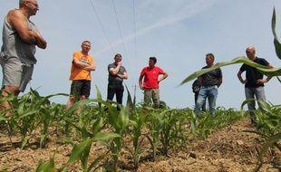 Des agriculteurs réunis au milieu d'un champ de maïs à Cesson-Sévigné, près de Rennes. Ils dénoncent les ravages des corbeaux dans leurs cultures.