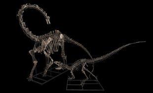 Photographies des deux dinosaures qui seront vendus mercredi 11 avril, à Drouot par la maison Binoche & Giquello.