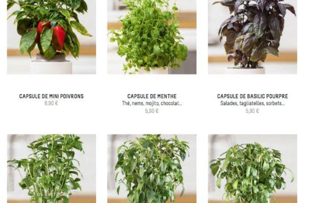 Un large choix de plantes aromatiques et à infuser, ainsi que de mini-légumes.