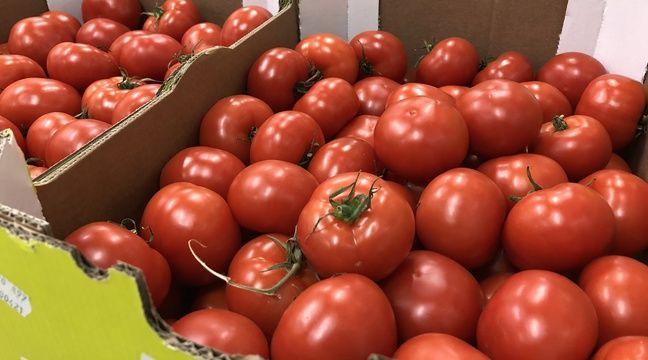 Le virus de la tomate inquiète les producteurs qui craignent une psychose