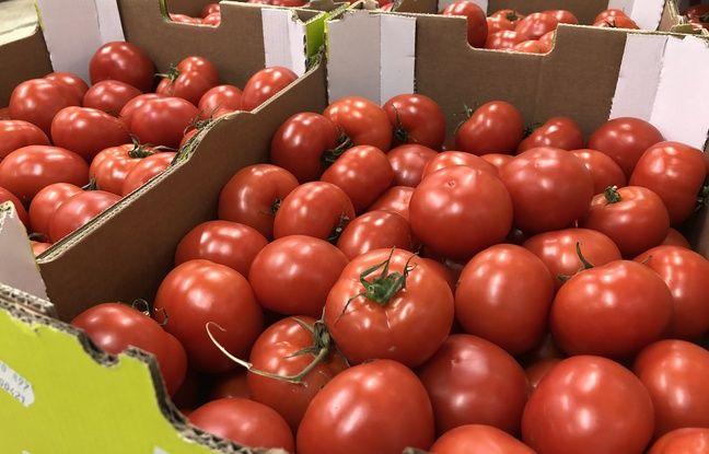 Bretagne: « Il ne faut pas tomber dans une psychose »... Le virus de la tomate fait trembler les producteurs