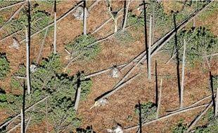Vue de la forêt des Landes un mois après le passage de la tempête Klaus le 24février 2009.