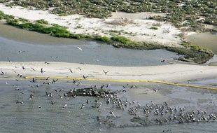 Des oiseaux au milieu d'une nappe de pétrole près de l'ile Breton Sound dans le Golfe du Mexique au sud de la Louisiane le 29 avril 2010.