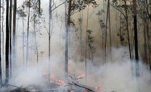 Un incendie près de Bodalla, en Australie.
