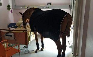 Le cheval Peyo en visite à l'hôpital.