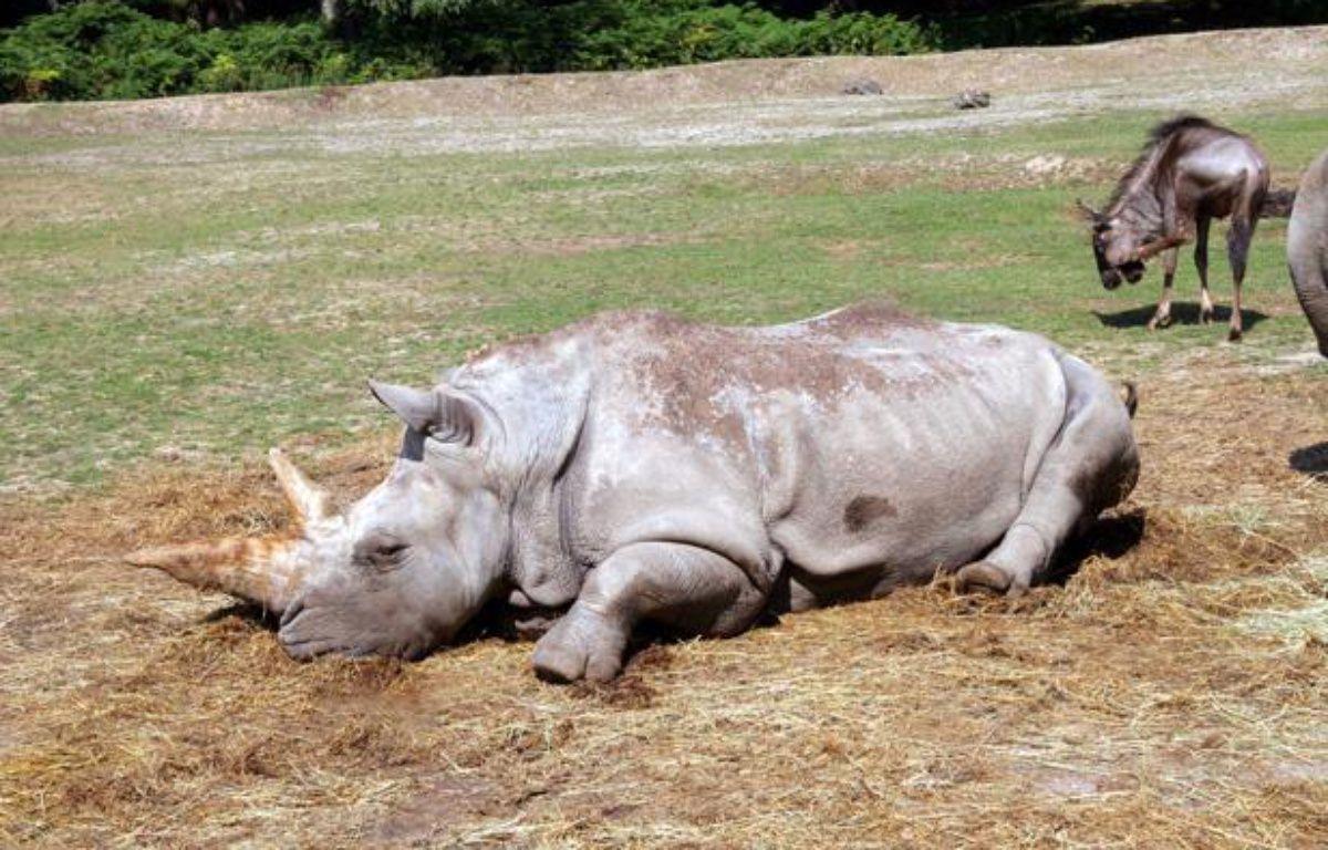 Un rhinocéros du parc de Thoiry, dans les Yvelines. – SIPA