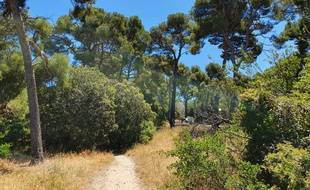 Selon Canbus, 200 pins seront rasés d'ici 2022