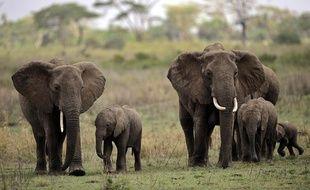 Des éléphants dans le parc national du Serengeti, en Tanzanie, le 25 octobre 2010.