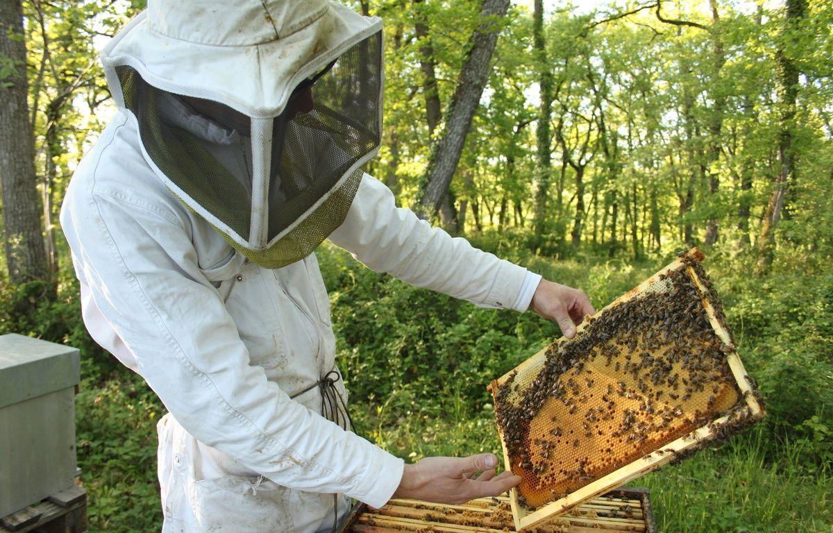 Jean-Baptiste Maillard, apiculteur dans le Gers. – A.Chauvet/20Minutes