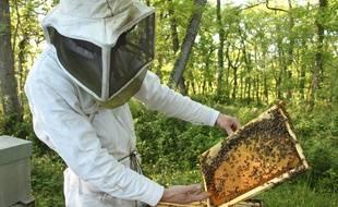 Jean-Baptiste Maillard, apiculteur dans le Gers.