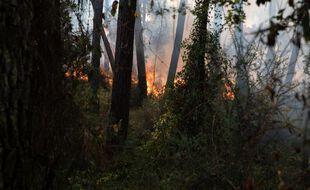 Feu de végétation fixé dans la Drôme, 200 hectares brûlés (Illustration)