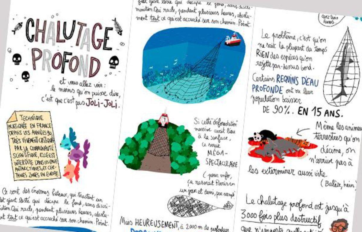 Extrait du dessin de Pénélope Bagieu sur le chalutage en eaux profondes. – P.Bagieu