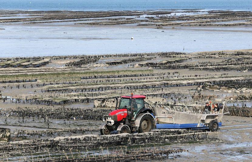 Bretagne : Les huître de Cancale inscrites au patrimoine culturel immatériel de l'Unesco