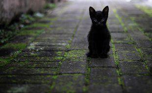Un chaton dans la rue. Illustration.