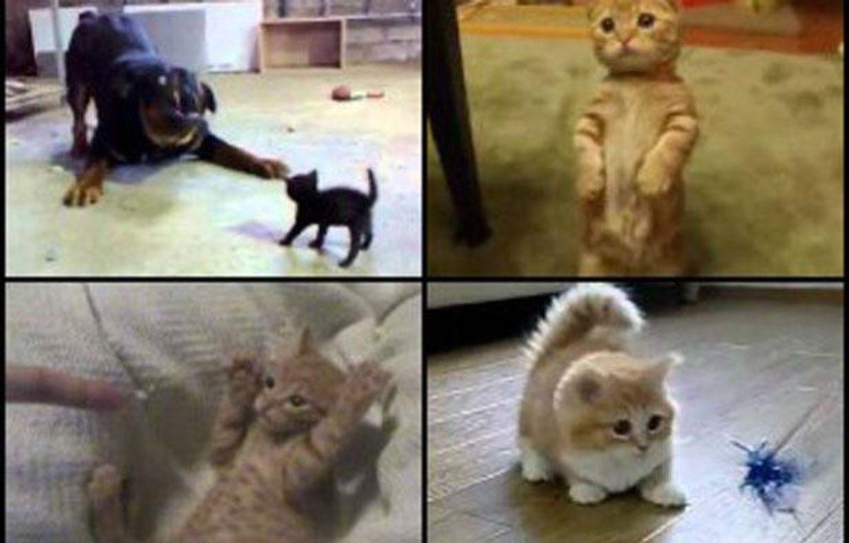 Des vidéos de LOLcat. – 20MINUTES.FR