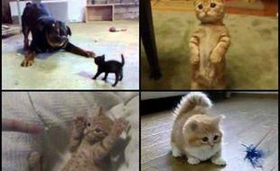 Des vidéos de LOLcat.