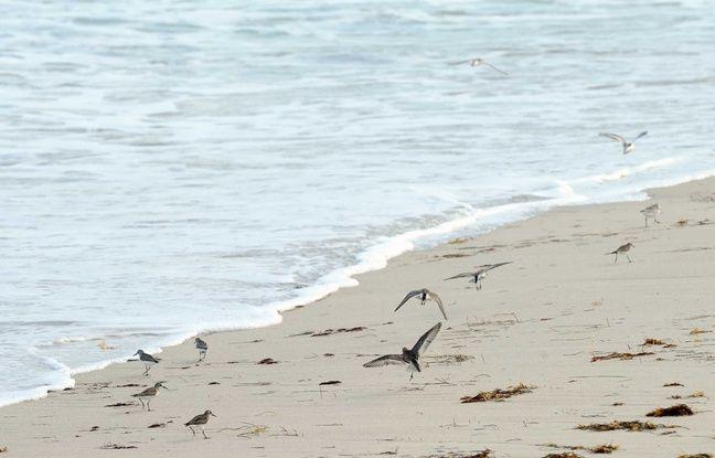 648x415 illustration plage grand macabou conservatoire littoral martinique