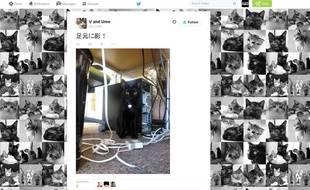 Capture d'écran du compte Twitter des chats de la Ferray Corporation, une entreprise japonaise qui a adopté neuf félins.