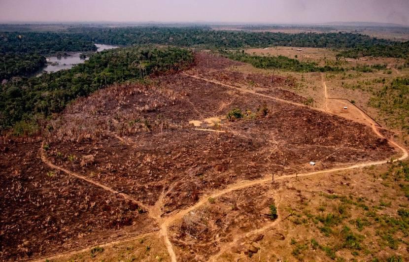 Brésil : La déforestation de l'Amazonie a presque doublé en 2019