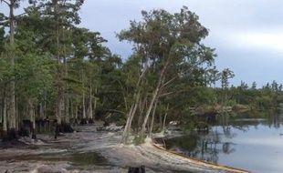 Des arbres ont été engloutis dans une rivière en Louisiane, le 21 août 2013.
