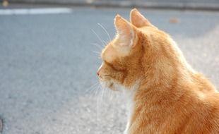 Un chat roux dans une rue (illustration).