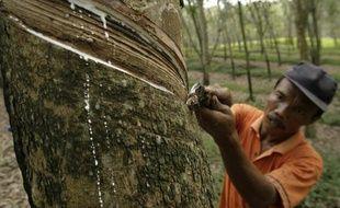 Récolte de la sève d'un arbre à caoutchouc, en Indonésie.