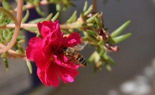 Une abeille butinant une fleur.