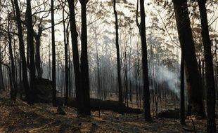 L'Australie enregistrait mercredi une nette accalmie sur le front des feux de brousse grâce à la chute des températures, mais une trentaine d'incendies menaçaient toujours dans l'Etat le plus peuplé du pays, la Nouvelle-Galles du Sud.