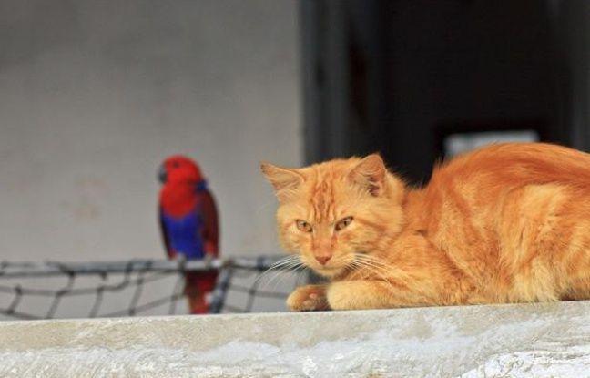 Un chat observant un perroquet.