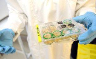 Des chercheurs sont parvenus à recréer des cellules souches de peau