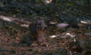 Ce chien abandonné en forêt est le visage de la