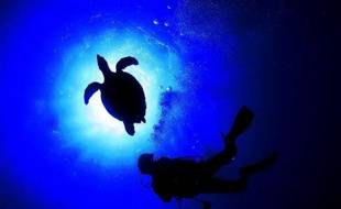 Sortir du laboratoire pour aller constater in vivo, au fond de la Méditerranée, comment réagissent coquillages et plantes aquatiques face à l'acidification des océans due au CO2: une simulation inédite en Europe est en préparation près de Nice.