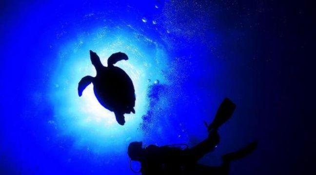 Sortir du laboratoire pour aller constater in vivo, au fond de la Méditerranée, comment réagissent coquillages et plantes aquatiques face à l'acidification des océans due au CO2: une simulation inédite en Europe est en préparation près de Nice. – Tarik Tinazay afp.com