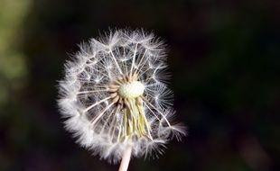 Illustration pollen