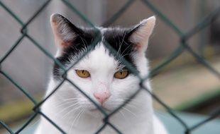 36 chats vivaient dans des conditions déplorables dans une maison à Manosque (illustration)